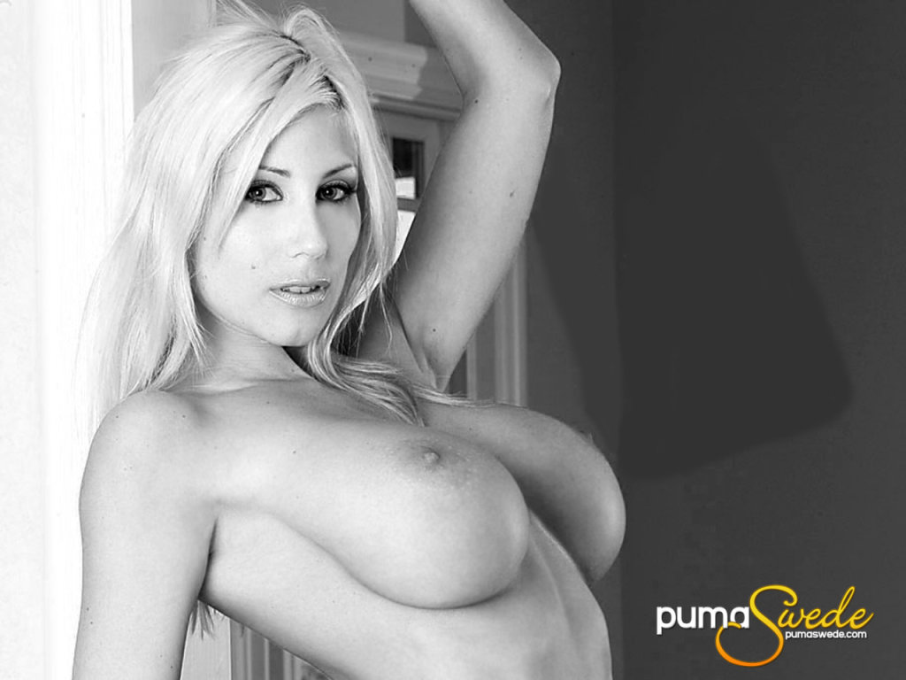 Puma Swede Wallpaper - 1024x768